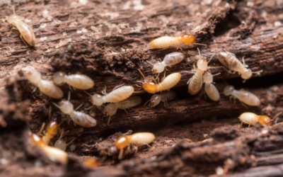 Is a Termite Letter Really Necessary?